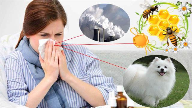 Một số thông tin về bệnh viêm mũi dị ứng