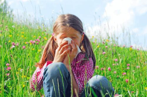 Phấn hoa - Nguyên nhân gây viêm mũi dị ứng phổ biến