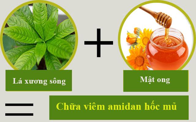 Chữa viêm amidan hốc mủ bằng lá xương sông và mật ong