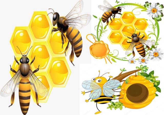 Sáp ong - Nguyên liệu chữa viêm mũi dị ứng