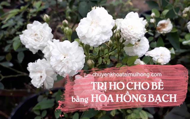 Điều trị ho cho bé bằng hoa hồng bạch