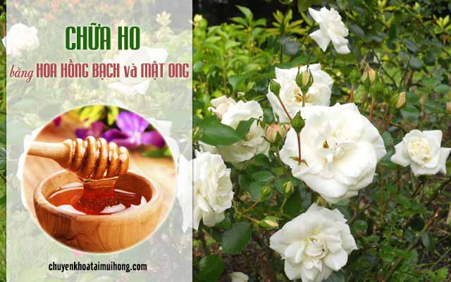 Chữa ho bằng hoa hồng bạch và mật ong