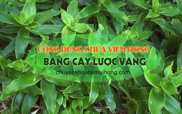 Công dụng chữa viêm họng từ cây lược vàng