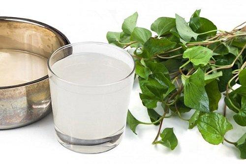 Lá diếp cá và nước vo gạo chữa trị bệnh viêm họng cho trẻ