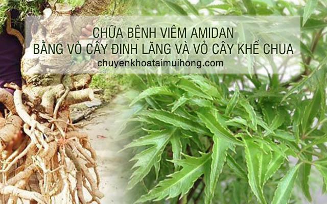 Điều trị viêm amidan bằng cách kết hợp vỏ cây đinh lăng với vỏ cây khế chua