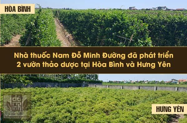 Vườn thuốc của Đỗ Minh Đường vun trồng các thảo dược tự nhiên, an toàn và chất lượng