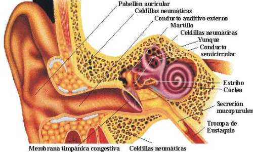 Viêm tai ngoài ở người lớn và cách chữa trị-1