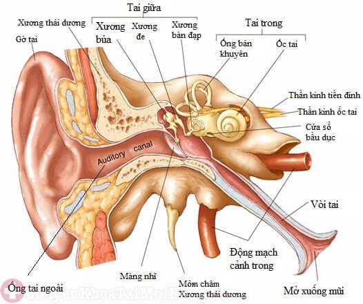 Viêm ống tai ngoài ở trẻ sơ sinh có nguy hiểm không