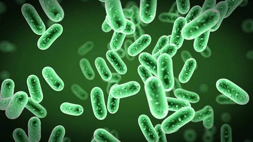 Vi khuẩn gây ra bệnh bạch hầu