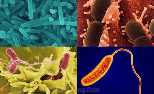 Vi khuẩn tấn công gây viêm amidan