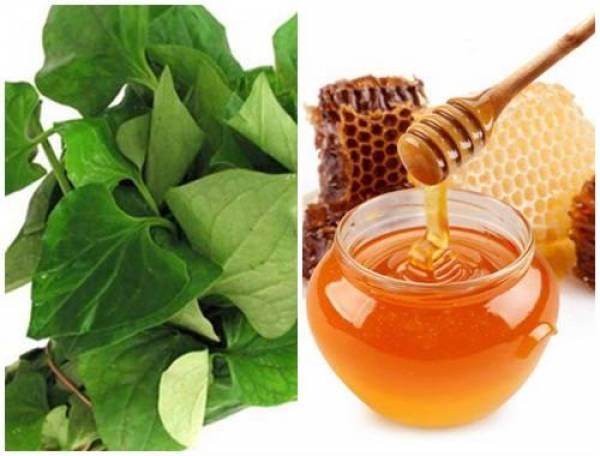 Sử dụng rau diếp cá và mật ong chữa viêm phế quản