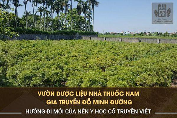 Nhà thuốc Đỗ Minh Đường phát triển vườn dược liệu sạch để cung cấp thảo dược bào chế thuốc