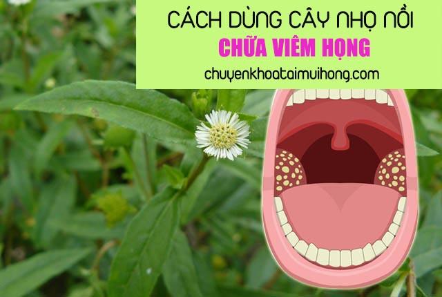 Mách bạn cách dùng cây nhọ nồi chữa viêm họng